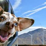 В Европу на машине с собакой.